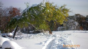 Fall in October and Snow - 2011